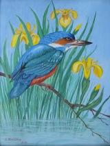 Eisvogel 1992